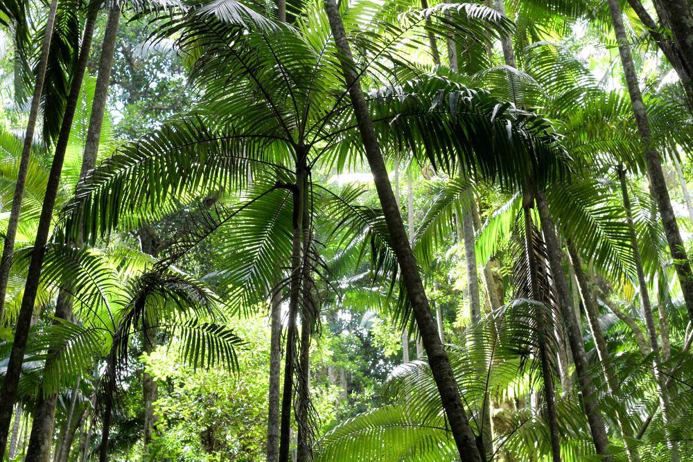 Kan vi ikke bare lade regnskoven passe sig selv?