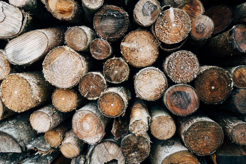 Overvej at få hjælp til fældning af træet